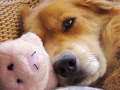 Doggie_12Feb09.jpg