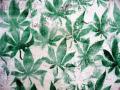 Cheam Cannabis Cultivation
