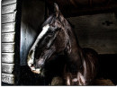 Horseplay: A Cop's Worse (Night)Mare