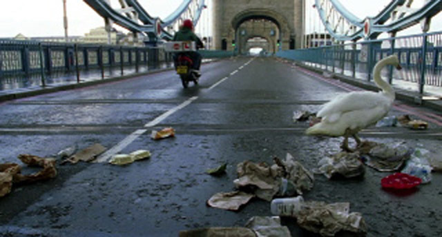 The first swan to get an Asbo for littering.