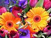1605.flower.jpg