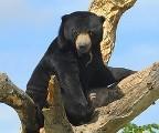 bear120509.jpg