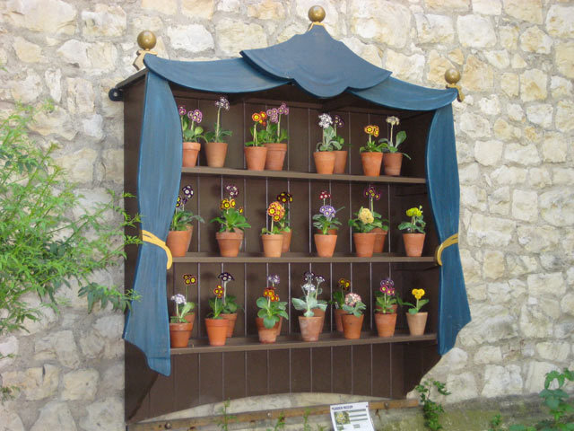 Seasonal Auricula Theatre