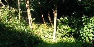 Nature-ist: Kirkwood Nature Garden
