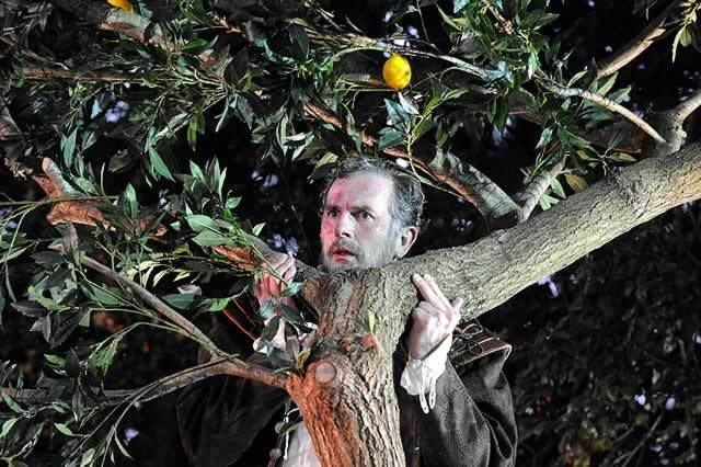 Sean Campion (Benedick) also uses the trees on set for laughs Photo by Alistair Muir