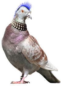 pigeonpunky.jpg