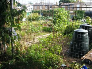 Flowerbed Tributes And Joined-Up Allotments