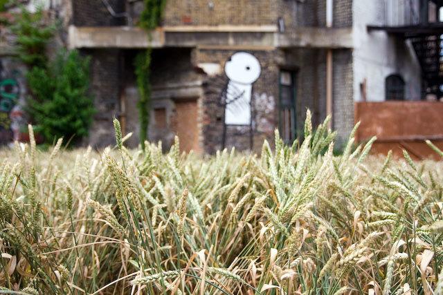 13653_dalstonmill_wheatclose.jpg