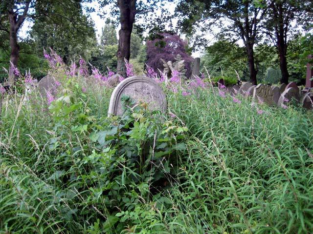 Purple overgrowth
