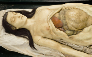 Review: Exquisite Bodies @ Wellcome Collection