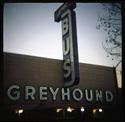 1908_greyhound.jpg