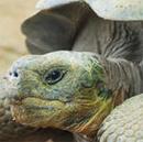 tortoisehhead.jpg