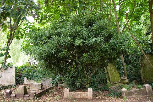 Tree growing in a grave