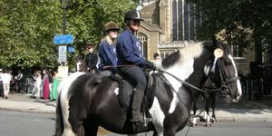 The Horses of London Have Now Been Blessed! [Horseman's Sunday]