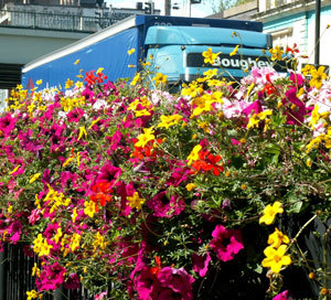 lorry_flowers21Sep09.jpg