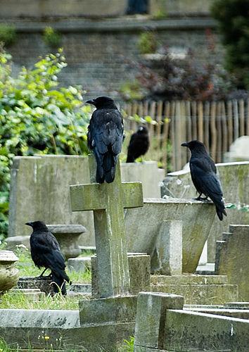 Nature-ist: Brompton Cemetery