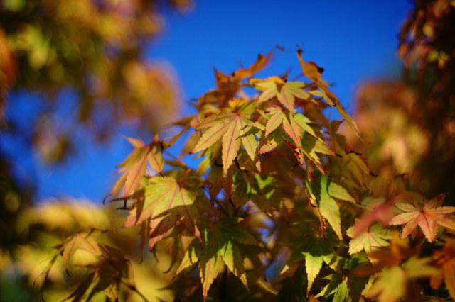 Leaf. By Jamie Mck.