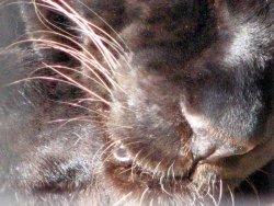 panther-face.jpg