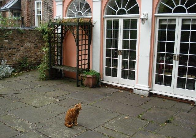 Arthur the cat pays a visit