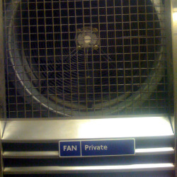 Fans.jpg