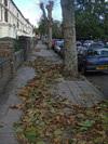 Greens Bash Boris Over Tree Planting Fail