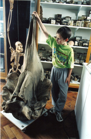 From The Grant Museum: A Disarticulated Whale