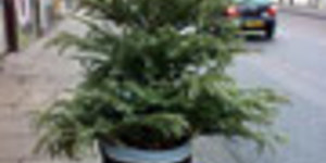 Christmas Tree Cost Doesn't Stand Up To Scrutiny
