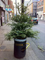 2312_tree.jpg