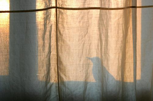 birdshadow.jpg