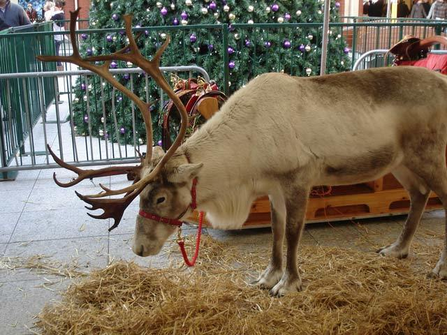 ealing_reindeer.jpg