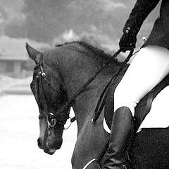 horseydancing.jpg