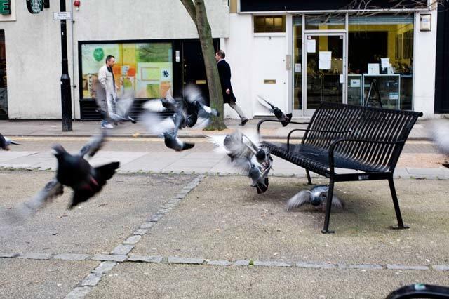 pigeonbench.jpg