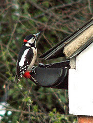 woodpeckergarden.jpg