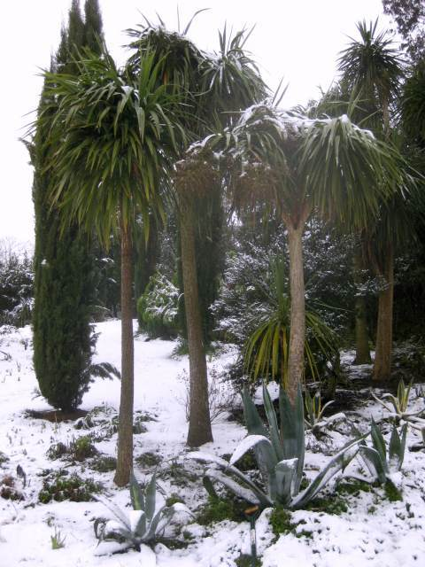 Palm trees covered in snow. M@