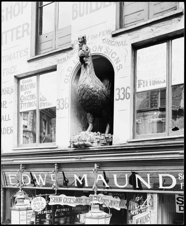 "This gilded cockerel once adorned The Cock public house in Fleet Street, haunt of Pepys, Thackeray, Dickens and Tennyson, until 1887 when the building was demolished for the Bank of England Law Courts Branch. Tennyson wrote of it: ""The Cock was of a larger egg / Than modern poultry drop, / Stept forward on a firmer leg, / And cramm'd a plumper crop.� Edward Maud, a joiner and shopfitter, acquired the bird and gave it pride of place in a niche of the front of his premise in Old Street, where it became a local landmark."