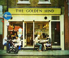 goldenhind.jpg
