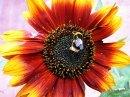 flowerbee160310.jpg