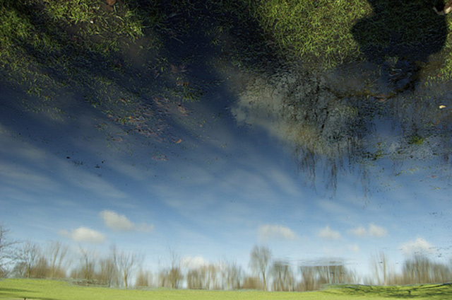 Trees, sky, reflections and vegetation