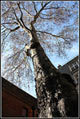 Conservation Lecture: Making Space For Urban Trees