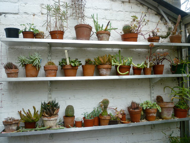 One wonderfully organised greenhouse