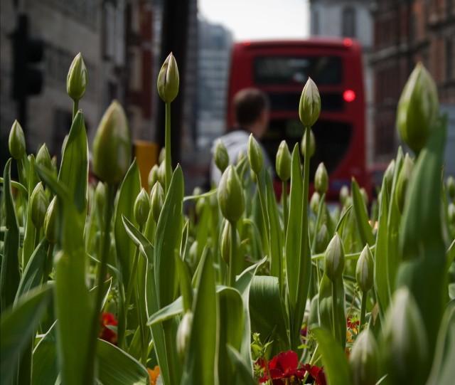 bishopsgate_tulips.jpg