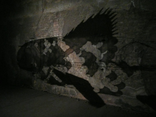 The fish cast eerie shadows on the crumbling walls.