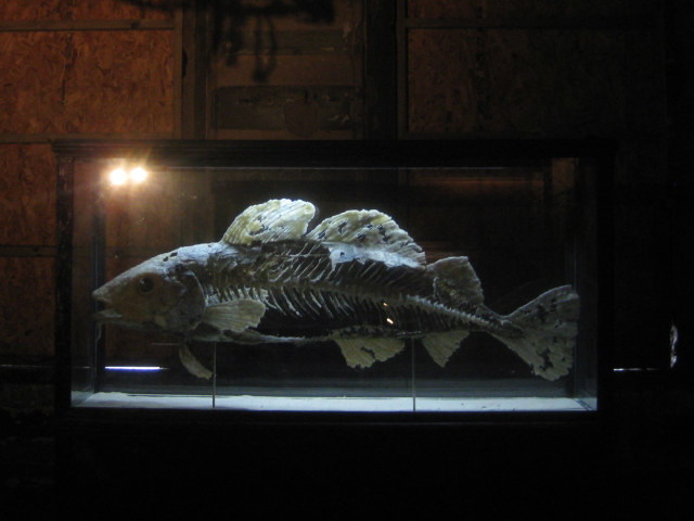 In inanimate 'rotting' fish, placed in a tank, looks strikingly real. In fact, it's made from wire and newspaper.