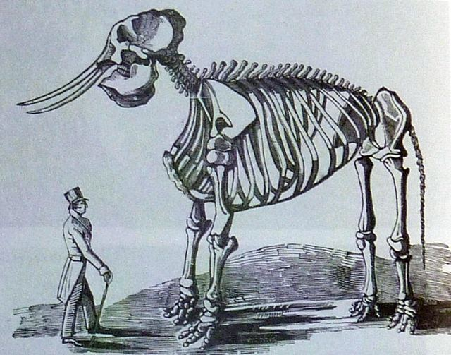 The skeleton of Chunee, the celebrated elephant who was shot down by a squad of soldiers in 1826.