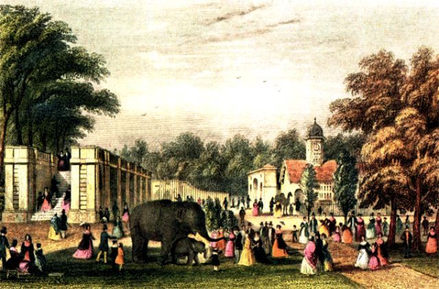 An elephant in London Zoo in 1842.
