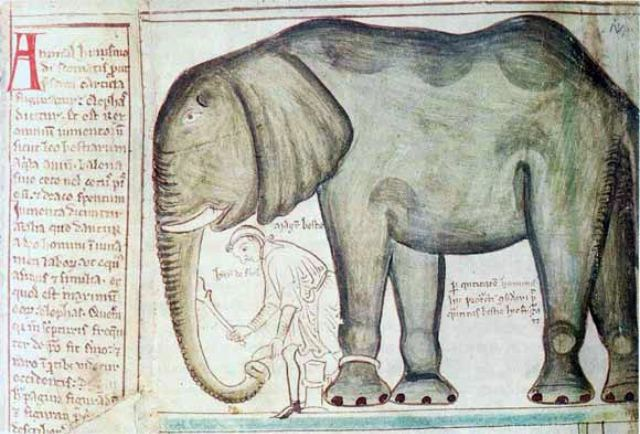 The elephant of Henry III, as drawn by Matthew Parris.