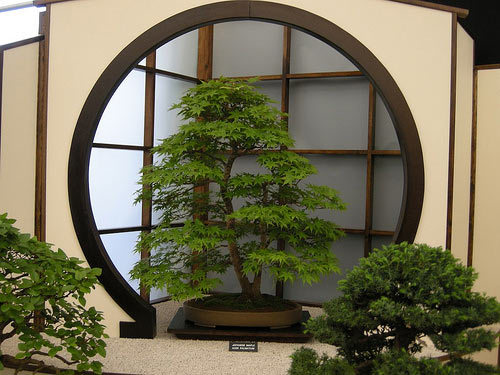 Bonsai by swdickie