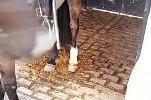 horsepoo.jpg