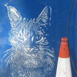 Pet Detectives Investigate Ealing