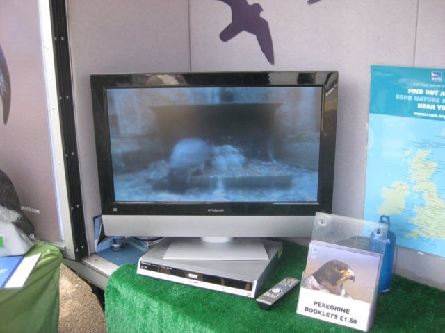 A screen plays archive footage of a peregrine nest.
